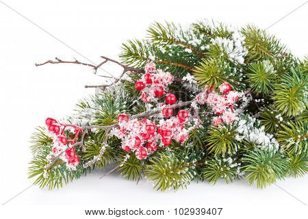 Christmas fir tree branch with holly berry and snow