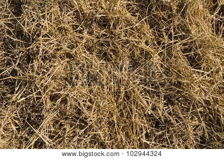 Dry Hay Closeup, Natural Straw Background