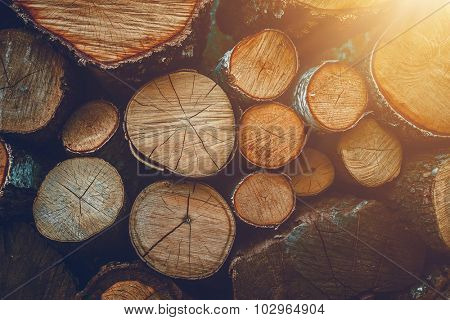 Birch dry wood cuts closeup in sunshine