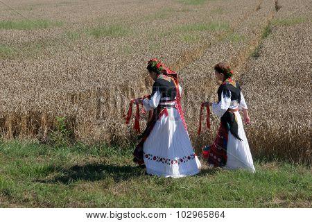 DAVOR, CROATIA - JUNE 26: Women in traditional costumes go into the field to harvest wheat in Davor, Slavonia, Croatia on June 26, 2010