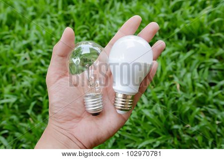 Led Bulb And Incandescent Bulb - Choice Of Energy
