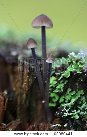 Group of toadstools on a rotten wood