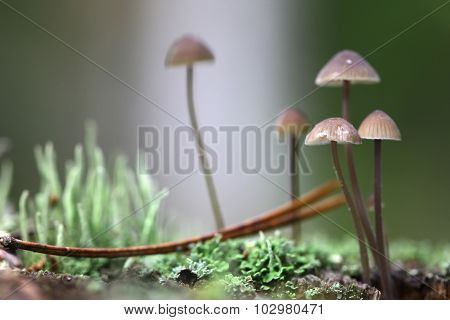 Group of toadstools in moss on a rotten wood