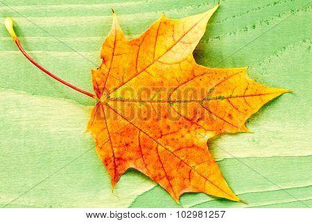 Autumn Leaf Over Green Wooden Background