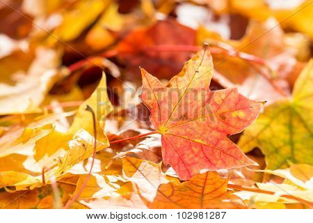 Fall Leaves On Forest Floor