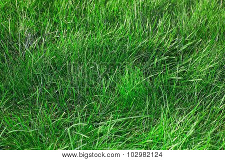Beautiful fresh green grass. Summer and lawn.