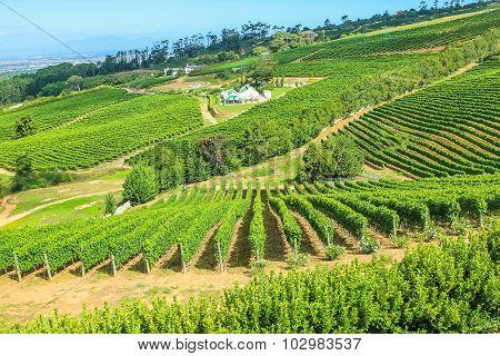 Vinery Farm
