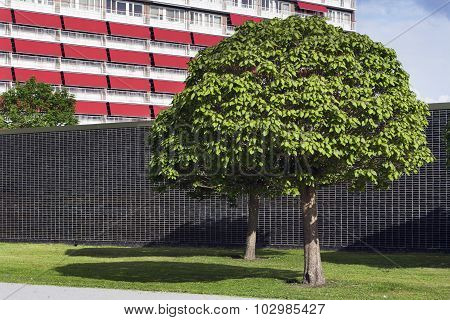 Wall And Trees In A Residential District