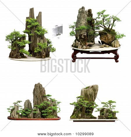 Collection Of The Best China Bonsai
