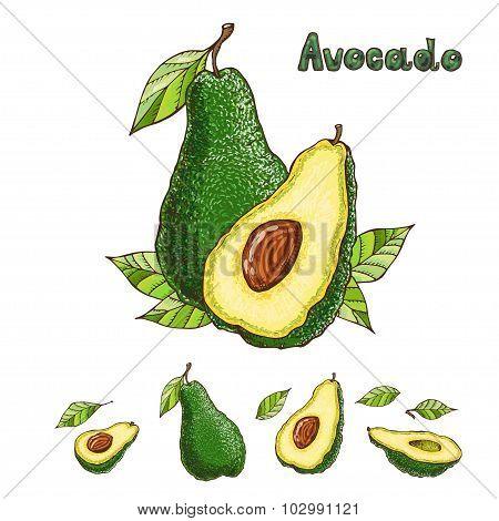 Hand Drawn Vector Avocado Collection