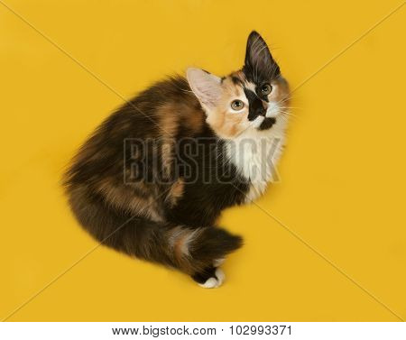 Tricolor Kitten Sitting On Yellow