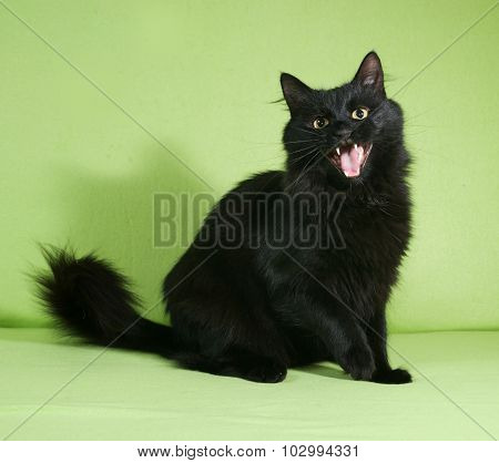 Black Fluffy Cat Sits On Green