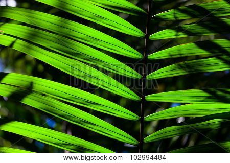 Green backlit leaf in the jungle