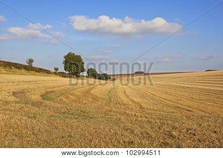 Harvest Landscape In Autumn