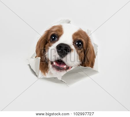 Dog And Paper