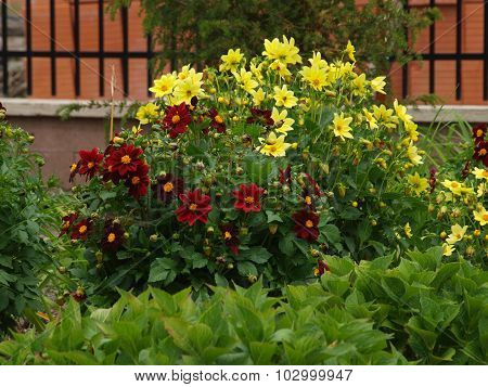 Blooming Garden , East Bohemia