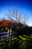 stock photo of split rail fence  - Tree and split rail fence with fall colors - JPG