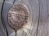 knot hole in a barn board.weathered to graceful perfection. poster