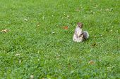 ������, ������: Squirrel