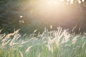 foto of dry grass  - Dry grass illuminated by morning sun. Grass grows on edge of a wood in the wild.