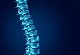 stock photo of spine  - Human Spine concept as medical health care anatomy symbol with the skeletal spinal bone structure closeup on a dark blue background as blank copy space - JPG