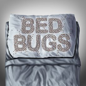image of parasite  - Bed bug on pillow and in bed as a bedbug infestation concept shaped as text letters as parasitic insect pests under the sheets as a hygiene health care symbol and metaphor of parasite bite danger inside a mattress - JPG