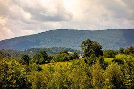 picture of mountain-ash  - Ashe County mountains North Carolina Seen From the Blue Ridge Parkway in summer - JPG
