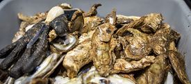 stock photo of oyster shell  - Pile of fresh malpeque oysters in the shell - JPG