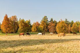foto of lenin  - Autumn grazing horses and Lenin in Gorki  - JPG