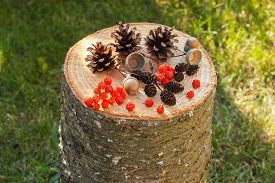 stock photo of cone  - Autumn fruits of forest on wooden stump in garden on sunny day rowan alder cone pine cone acorns - JPG