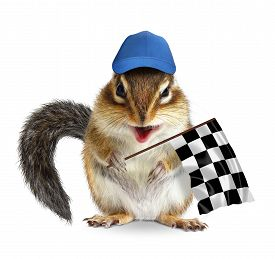 picture of laughable  - Funny chipmunk with racing flag on white - JPG