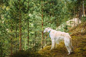 foto of ravines  - White Russian Dog - JPG