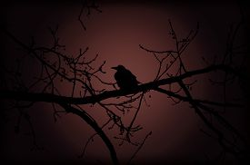 stock photo of moon silhouette  - Silhouette of Raven on a branch at night on the background of the moon in red light - JPG
