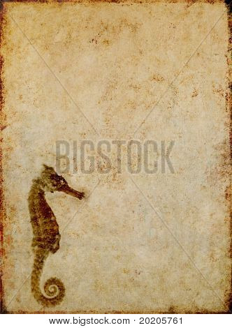 brown background image with interesting texture, close-up of a sea horse and plenty of space for text