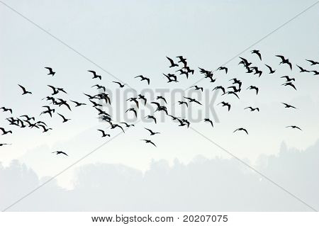 flock of seagulls across the horizon in the swiss countryside