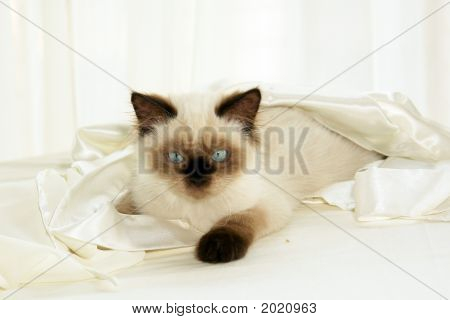 Cat In Cloth