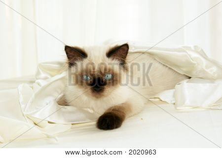Cat In Cloth