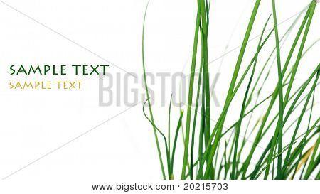 encantadora imagen abstracta de la hierba verde sobre fondo blanco