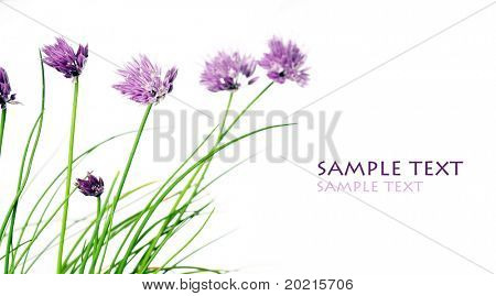 lovely flowers against white background