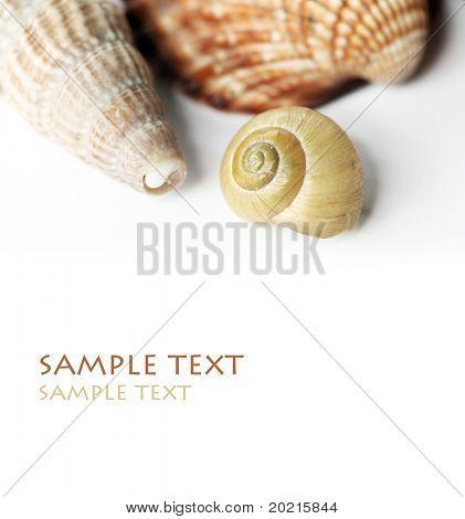 lovely seashells against white background