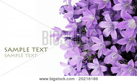 lieblich lila Blumen against white background