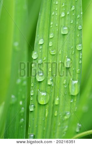 lovely abstract image featuring green leaves with small water drops (deliberate use of shallow depth of field)