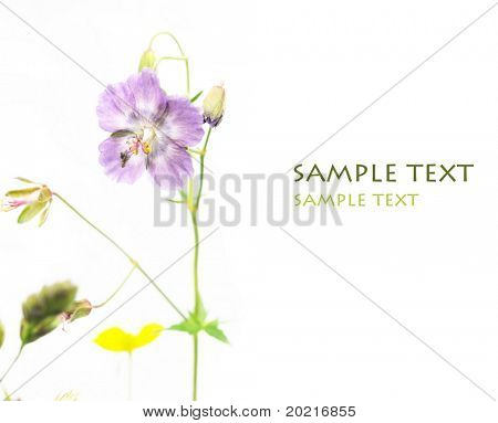 beautiful flowers against white background (deliberate use of shallow depth of field)
