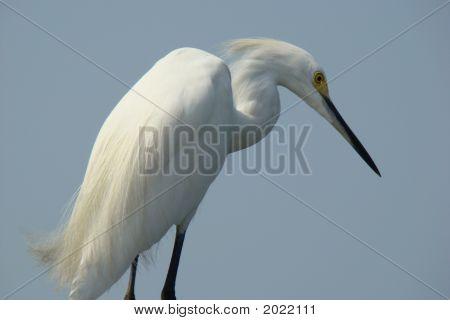 Vogel von Florida