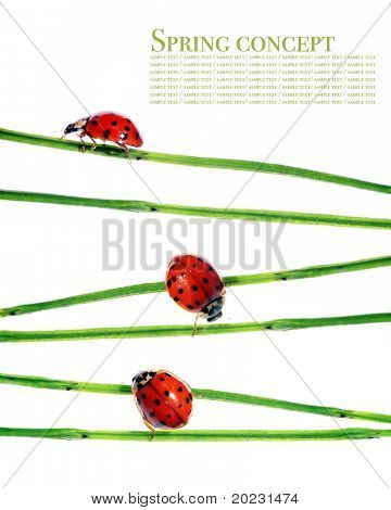 spring concept. flora and ladybirds against white background.