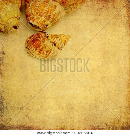 lovely background image with sea shells. useful design element.