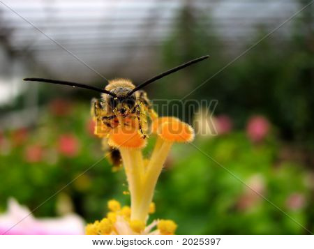 A Wasp And Pollens