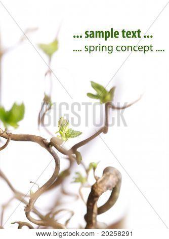 Flora sobre fondo blanco (a muy poca profundidad de campo)