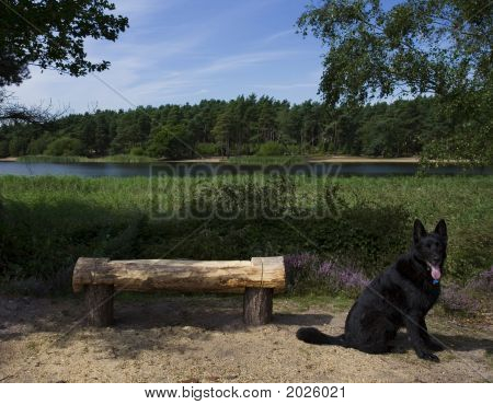Lakeside Seat With Dog