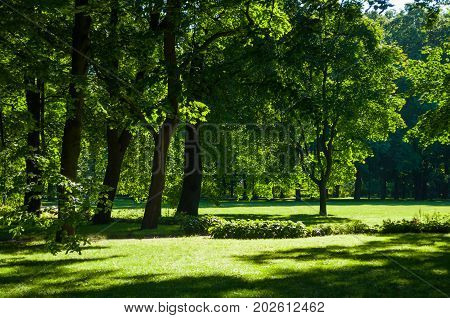 poster of Summer landscape. Colorful summer park with deciduous summer trees in sunny weather - summer landscape scene. Sunny summer park in nice sunny weather. Picturesque summer landscape